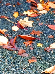 leaves on concrete