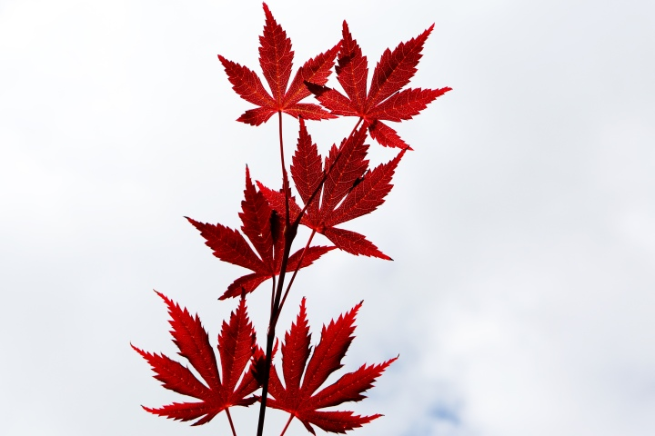 2016-09-life-of-pix-free-stock-leaves-red-sky-leeroy